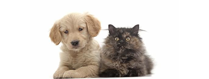 Eläinten hoitotarvikkeet
